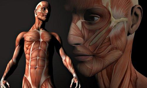 Негативное влияние никотина на мышцы