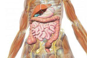 Опасность патологий внутренних органов при курении
