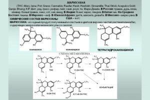 Состав марихуаны в формулах