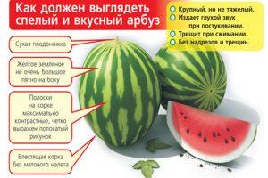 Выбор спелого арбуза
