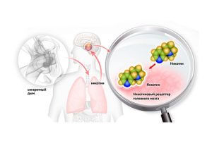 Воздействие никотина на рецепторы мозга