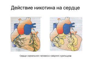 Действие никотина на сердце