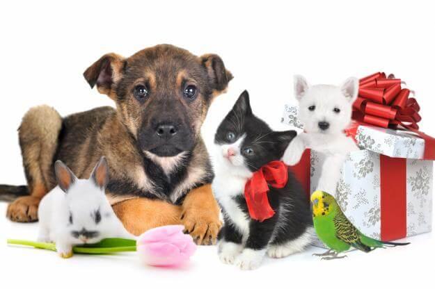 Разные товары для животных