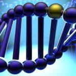 Восстановление организма и кожи в зависимости от наследственности