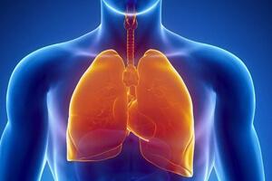 Вред курения для дыхательной системы
