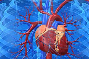 Вред курения для сердечно-сосудистой системы