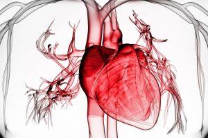 Негативное влияние никотина на сердечно-сосудистую систему