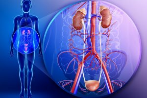 Вред курения для мочеполовой системы