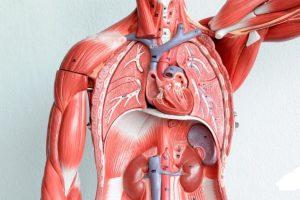 Негативное влияние курения на внутренние органы