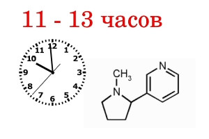 Полное выведение никотина из организма через 11-13 часов