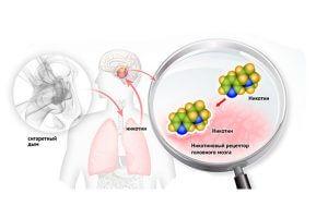 Действие никотина на рецепторы головного мозга